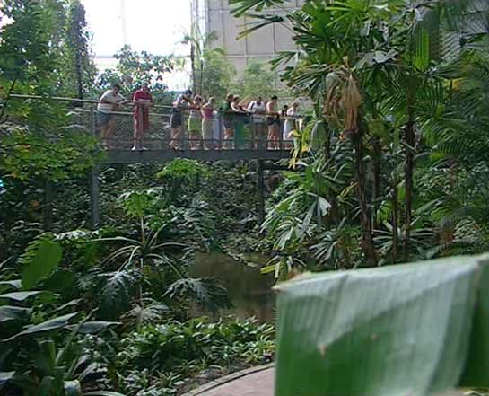 unser Philodendron bei Tropical Islands