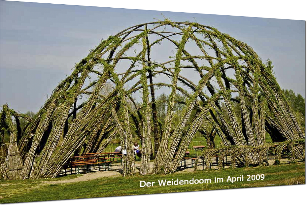 der Weidendoom im April 2009